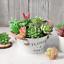 FEPITO-15-Pcs-Artificial-Succulent-Plants-Green-Unpotted-Faux-Flower-Succulents thumbnail 4