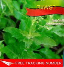 2400 Seeds Kaprao Thai Holy Basil Ocimum Sanctum Tulasi Herb Food Spicy Organic