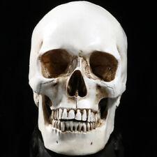 Life Size 11 Resin Human Skull Model Anatomical Medical Teaching Skeleton Head