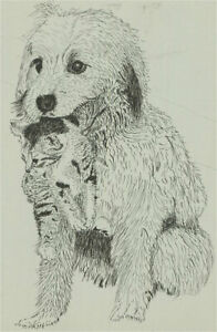 N.K. Day - 20th Century Pen and Ink Drawing, Dog and Kitten