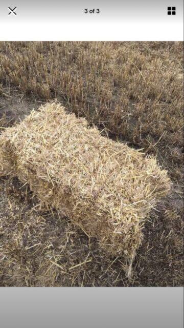 Wheat straw bales