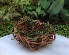 Miniature FAIRY GARDEN Terrarium ~ Mini Grapevine & Moss Birds Nest ~ NEW
