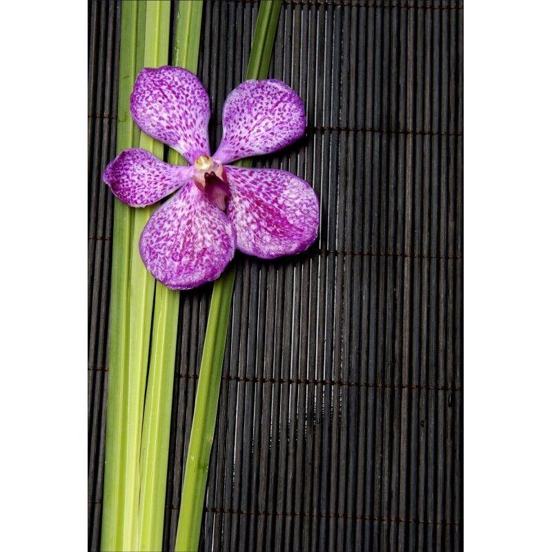 Te  er un voeu Stickers géant déco : : : Fleur 1299 a959b1