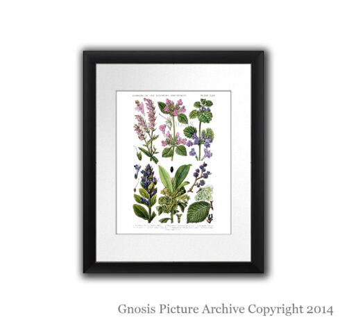 Butterflies /& Wildflowers set of 4 Wall Hanging Girl room Decor Prints