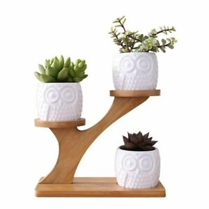 Simple White Succulent Plant Flower Pot Holder Ceramic Owl Pumpkin Pattern Pot