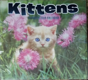 image is loading 2019 kittens 12 month wall calendar 12 034