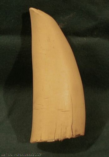 Imitation Replica Scrimshaw for Display Whale Tooth Engraving  #1