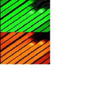 Multi-Colored 6 Inch Glow Necklaces! 20 per purchase!