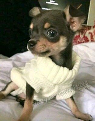 PUPPY COAT TINY XXXS Chihuahua 4 White Knit Coat Pet Clothes Dog XXS XS Teacup