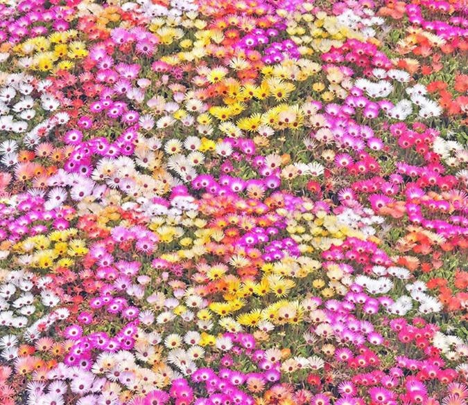 3D Blumenfeld Fototapeten Fototapeten Fototapeten Wandbild Fototapete Tapete Familie DE Lemon 7bc2b3