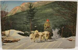 Vintage-Postcard-Ed-Clarke-039-s-Eskimo-Sled-Dogs-in-Action-Snow-White-Mountains-NH