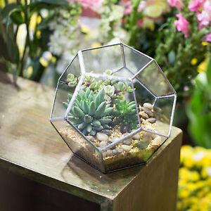 Geometric Ball Shape Plants Glass Terrarium Planter Pot Box For