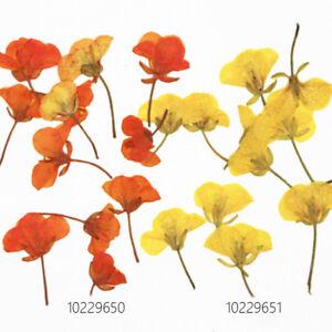 Pressed Rape Flowers Dried Real Flower Jewelry Diy Bracelet Gift
