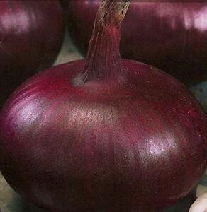 Onion Seeds  Chalcedony Heirloom Vegetable Seed from Ukraine