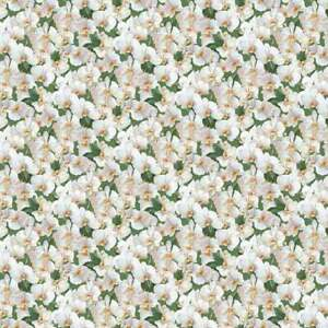 Northcott MORNING GLORY SHIMMER Sandy Green Quilt Fabric By The Yard 23388M 74