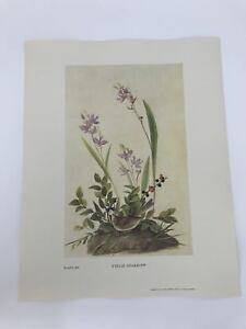 John-James-Audubon-Folio-Plate-289-Field-Sparrow-Limited-750