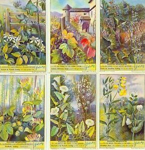 LIEBIG : S_1624 : 'Plantes grimpantes