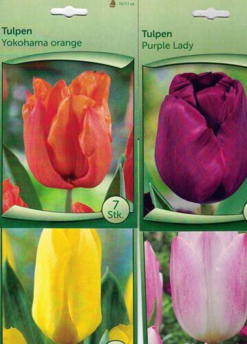 tulipani 4 varietà 37 bulbi di tulipani confezionati separatamente mix