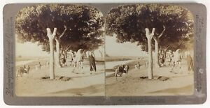 Egitto-Route-Dei-Piramidi-1896-Foto-Stereo-Vintage-Albumina