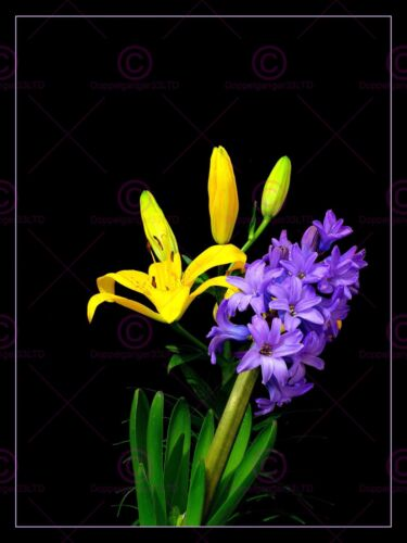 PHOTOGRAPH  BORDERED YELLOW PURPLE FLOWERS ART PRINT POSTER MP3355A