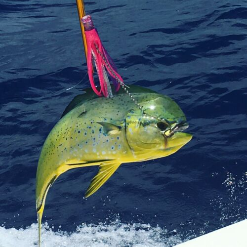 Saltwater Fishing Lure Mahi Tuna Wahoo Dorado Billfish Offshore Trolling Skirt