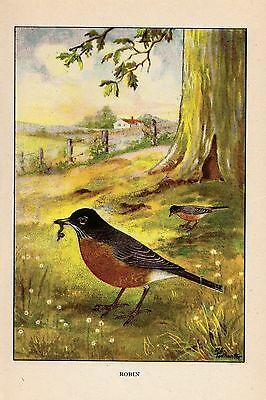 """1926 Vintage TODHUNTER BIRDS /""""CARDINAL/"""" STUNNING 90 YEARS OLD Color Lithograph"""