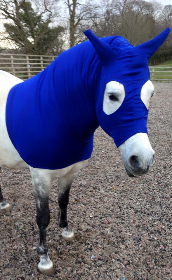 Royal bluee horse hood, horse showing hood, Stretch horse hood, BESPOKE