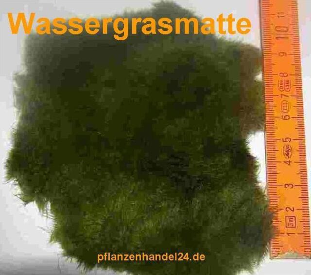 1 MATTE WASSERGRAS  ca. 8x 10 cm WASSERGRASMATTE, MOOS