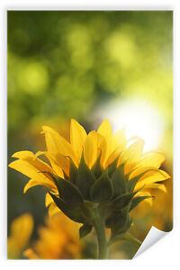 Postereck-Poster-0935-Sonnenblume-Natur-Blume-gelb-Sonne-gruen-Pflanze
