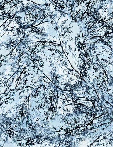 Snowy Winter Trees /& Sky Cotton Quilt Fabric by Timeless Treasures