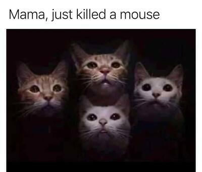 Men/'s Ladies T SHIRT funny spoof CAT kitten sniper gun rifle killer shooter