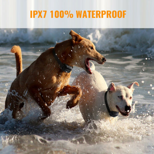 Petrainer Waterproof Rechargeable Dog Training Shock Collar With Remote 2 Dogs