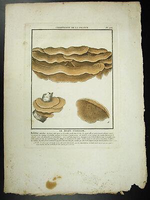 Gravure Le Bolet Unicolor Pierre Bulliard 1780 Champignons De France Mushroom Para Ayudar A Digerir Alimentos Grasosos