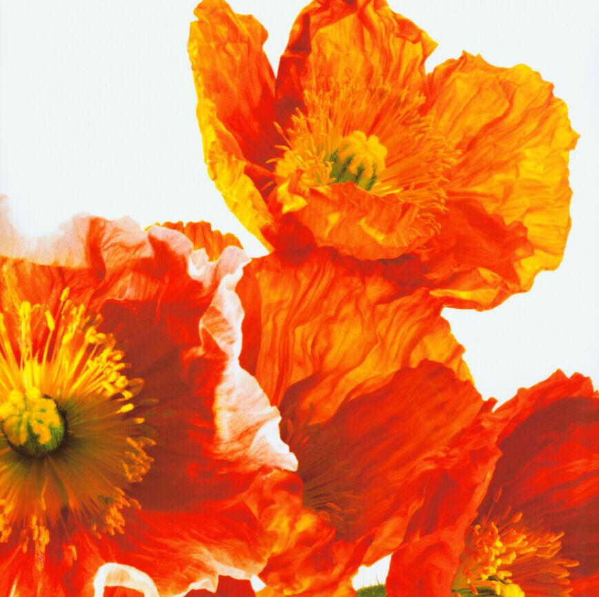 3D Dazzling Fleur 8 Photo Papier Peint en Autocollant Murale Plafond Chambre Art