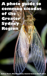 A-photo-guide-to-the-common-cicadas-of-the-Greater-Sydney-Region-nature-ecology