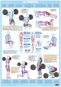 Body Building Poster Weight Training Leg Muscles