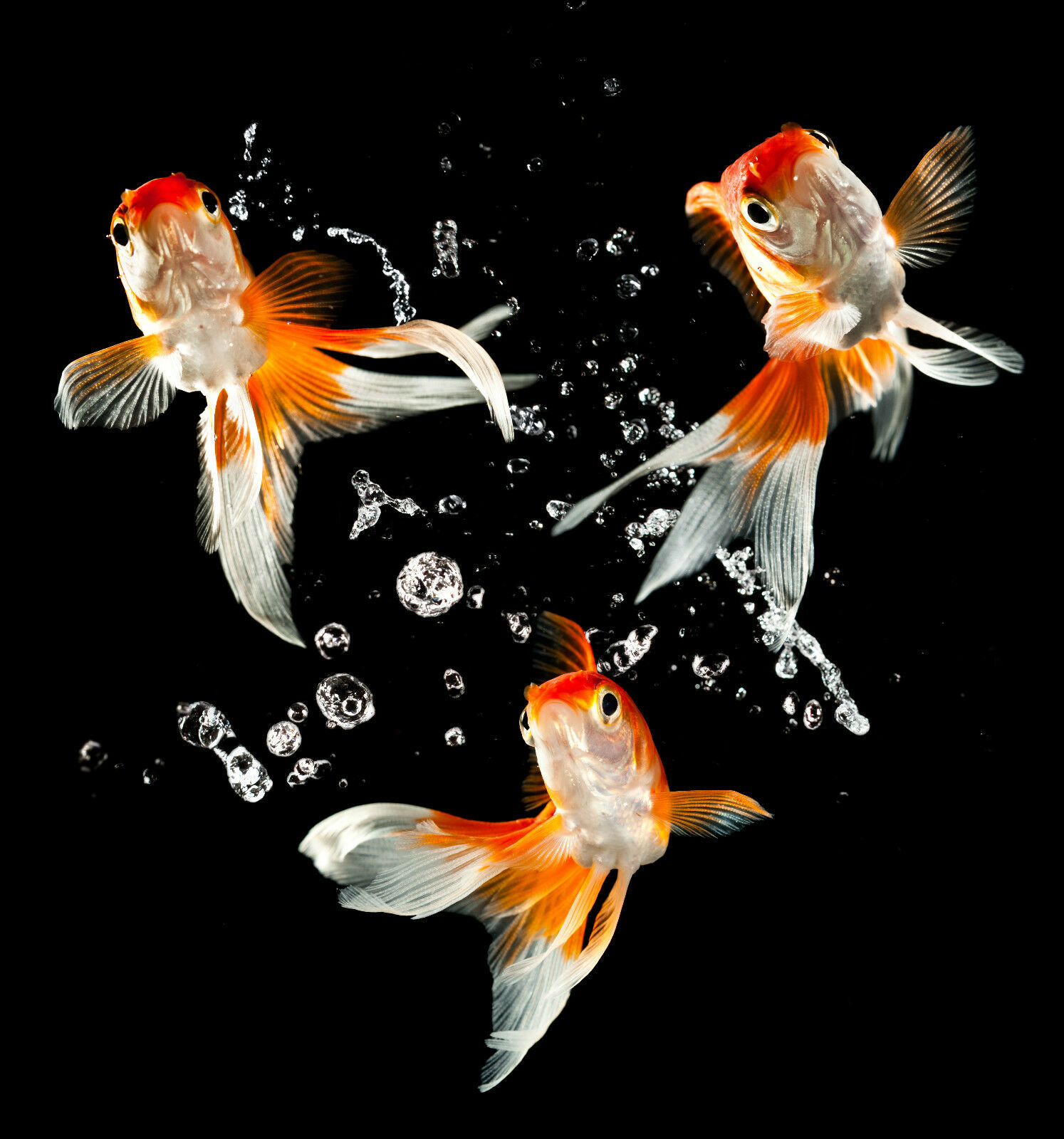 3D Jumping goldfishes 1 Wall Paper Wall Print Decal Wall Deco Indoor Wall Mural