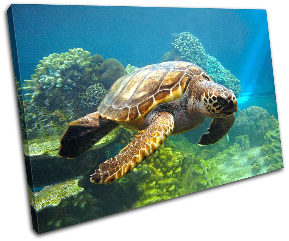 Sea Turtle Animals SINGLE Leinwand Wand Kunst Bild drucken