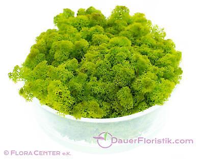 Islandmoos limettengrün 2,65 kg konserviert preserved apfelgrün leuchtend grün