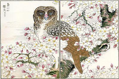 ART PRINT POSTER PAINTING JAPANESE WOODBLOCK CHERRY BLOSSOM PARK NOFL0777