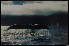 WHALE TAIL - NATURE POSTER 24x36 - OCEAN WILDLIFE 27024