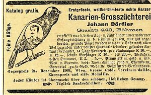 Kanarien Grosszücherei Johann Dörfler Graslitz Böhmen Historische Annonce 1910