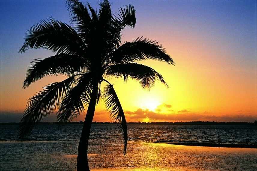 3D Coco Sunset Silhouette Paper Print Wall Decal Wall Deco Indoor Wall Murals