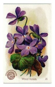 Wood Violets, Arm & Hammer Beautiful Flowers Victorian Trade Card *VT30C