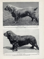 SUSSEX SPANIEL TWO NAMED DOGS OLD 1934 DOG PRINT