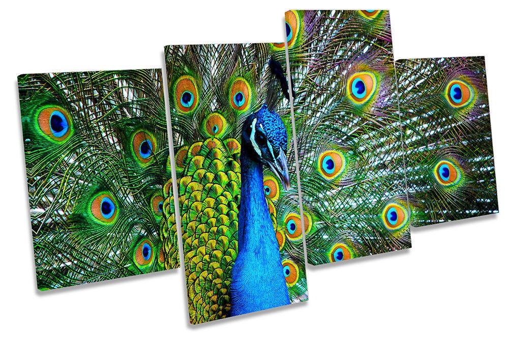 Piume di di di Pavone Bird foto Multi Tela Wall Art Print 360b01