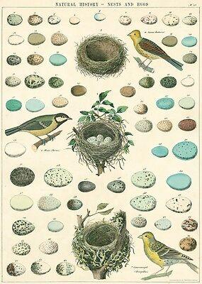 Cavallini Birds, Nests & Eggs Flat Wrap