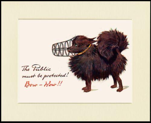 POMERANIAN SPITZ LOVELY COMIC DOG PRINT MOUNTED READY TO FRAME