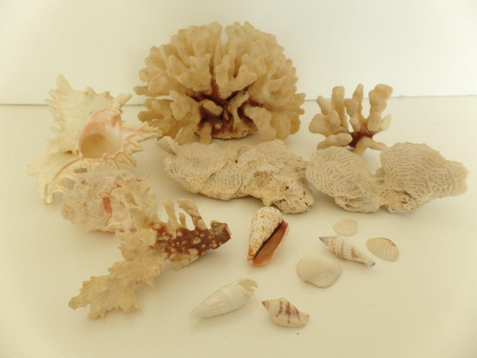 8lbs Aquarium Coral Lot Bleach Beach Murex Branch Cone Sea Shell Decor Craft