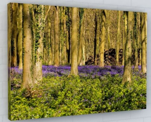 STUNNING BLUEBELL WOODS WOODLAND FOREST CANVAS PICTURE PRINT WALL ART #100